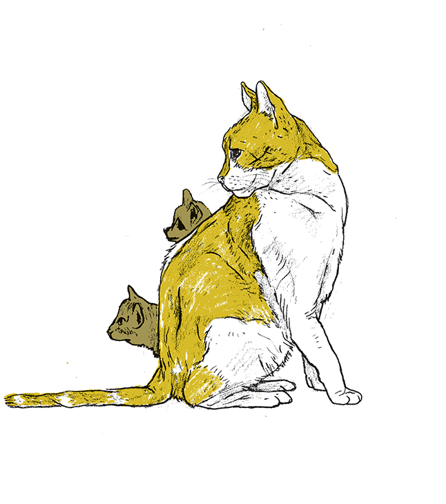 cat01_web