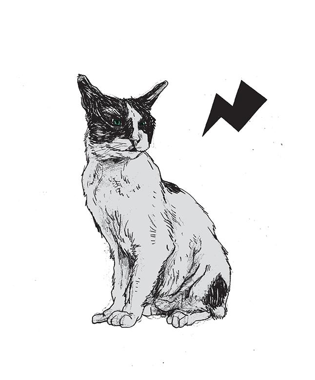 cat02_web
