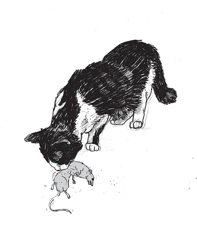 cat03_web