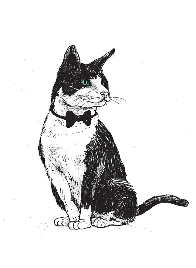cat04_web