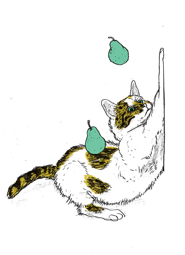 cat05_web