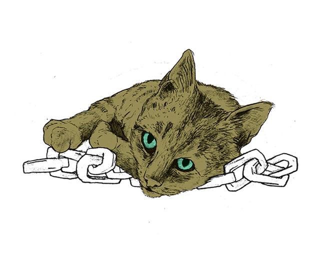cat06_web